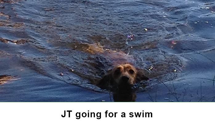 Jt swimming1 image