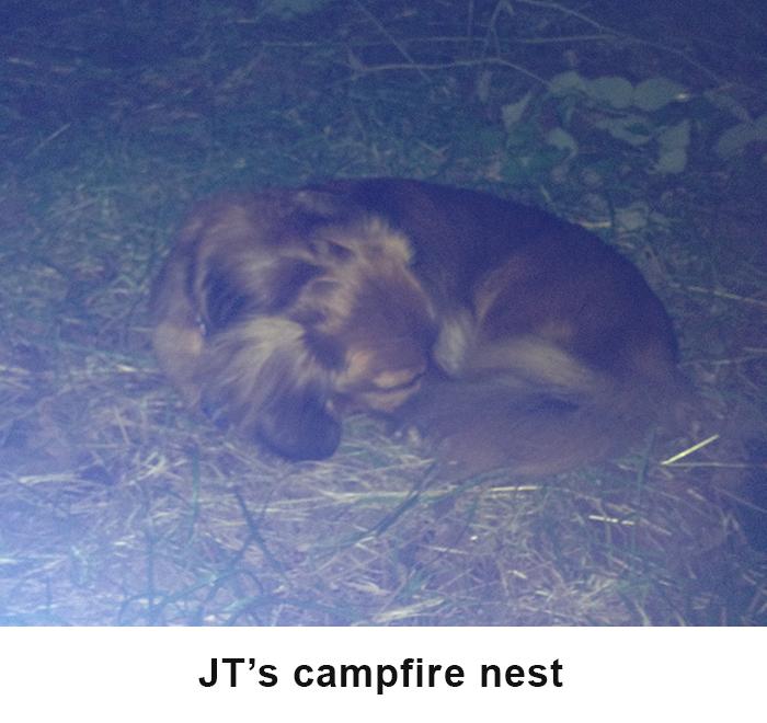 Jts nest image