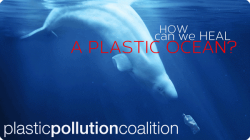 A Plastic Ocean Film 2016 how can we heal a plastic ocean plastic pollution coalition whale diving for plastic bottle dispenser amenities
