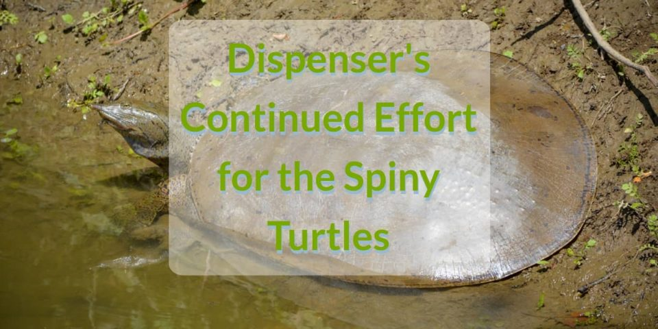 spiny turtles dispenser amenities blog header dispenser's continues effort for the spiny turtles dispenser amenities