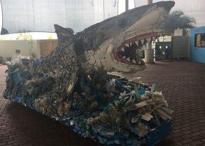 Moat Museum Shark Exhibit