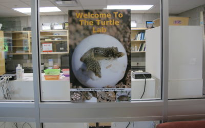 poster with turtle emerging from egg welcome to the turtle lab on glass window dispenser amenities