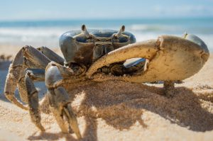 Beach crab  image