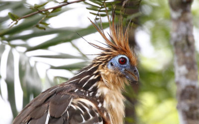 close up picture of bird with red eyes and pointy brown feather on its head dispenser amenities