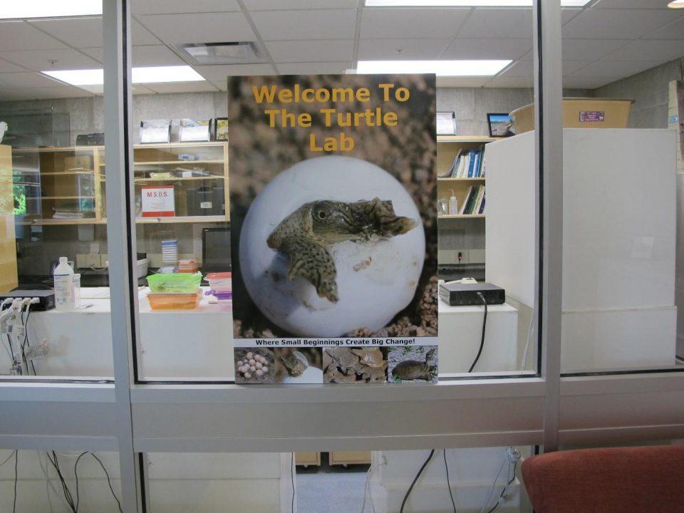 Turtle lab image