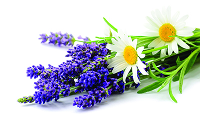 Daisies and lavender flowers bunch close up isolated on white background